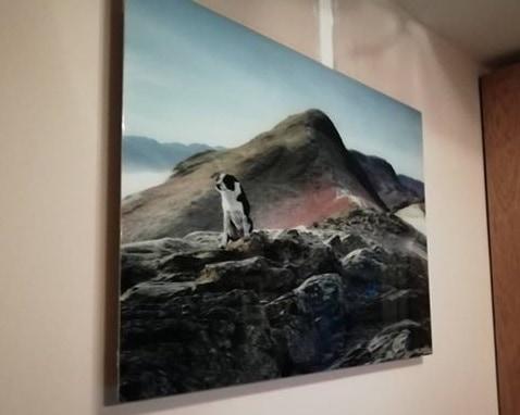 Weitere Ideen für Herschel Inspire-Bilder wie dieses Lieblingsbild eines Haustieres